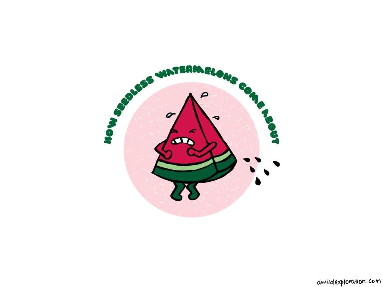 Seedless Watermelon_Final