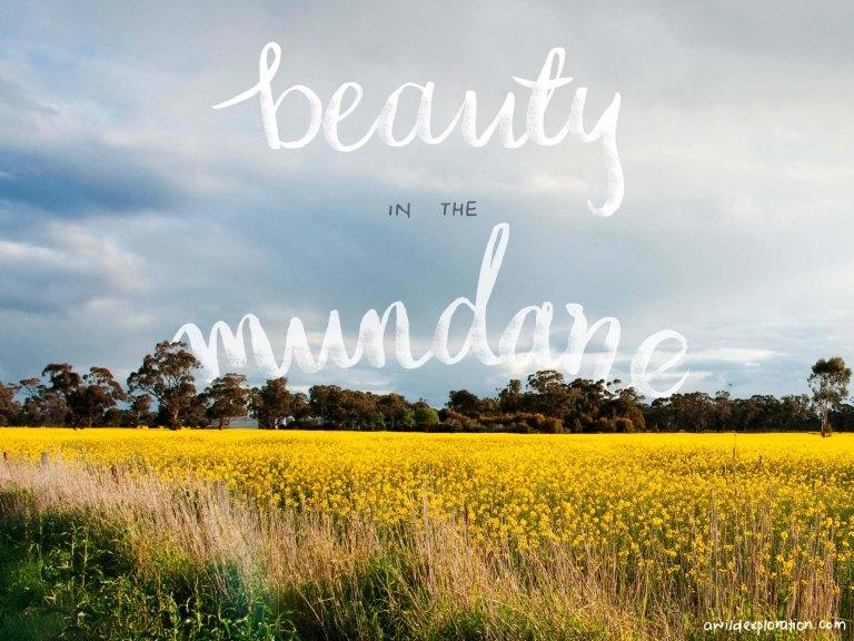 24_beauty in the mundane